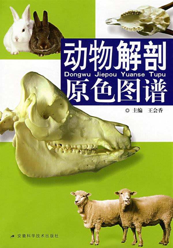动物解剖原色图谱