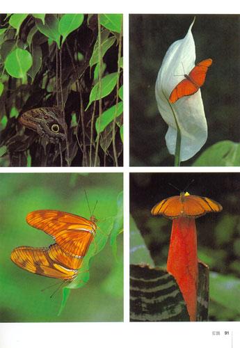 《自然摄影:动物,植物与风景》((德)波尔钦)【图片