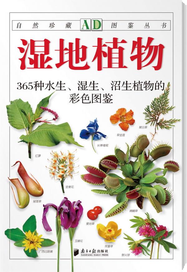 植物封面手绘图片大全
