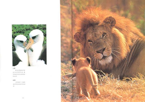 的动物情感世界