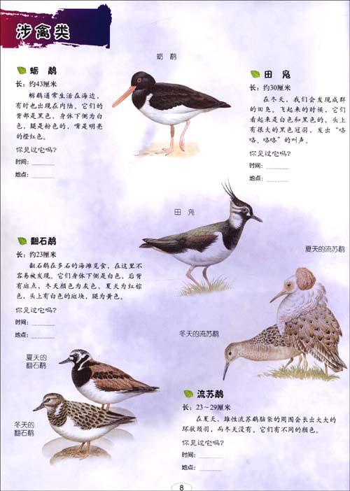 我的动物贴画小百科 鸟 昆虫 猫 海洋生物 马 狗 野生动物 恐龙 英国引进