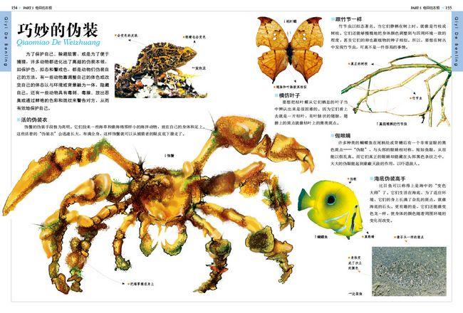蜘蛛身体结构介绍