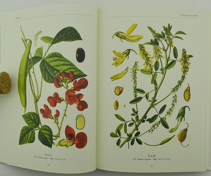 奥托世界大师手绘彩色植物之书