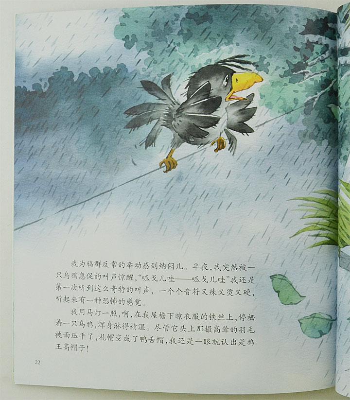 《沈石溪动物绘本(珍藏版)(全10册)》