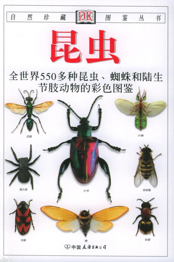 蜘蛛和陆生节肢动物的彩色